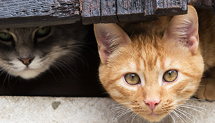 Sanierung nach Tierhortung